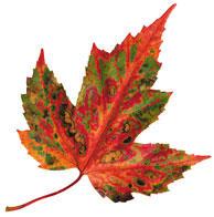 Fall make-over season
