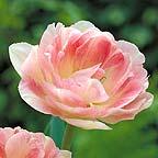 Mark your calendars: Macy's Flower Show