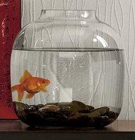 Decoration Idea: Goldfish