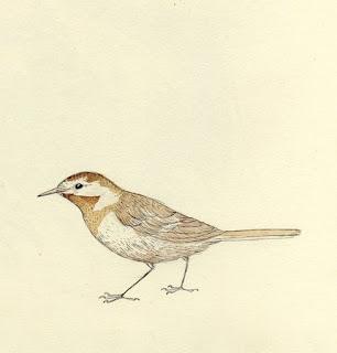Inspired: Tea Bird