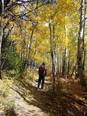 Honeymoon: Rocky Mountain National Park