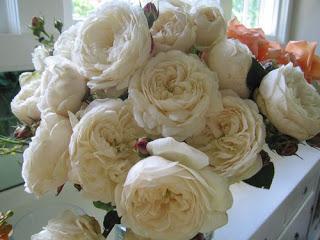 More Garden Roses