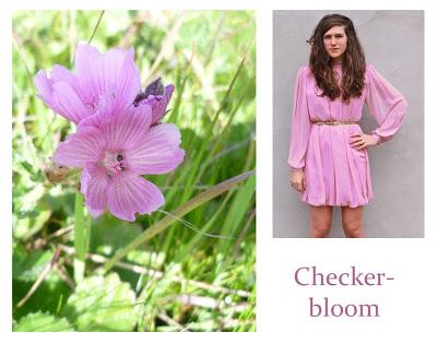 Flower Week: Checker-bloom