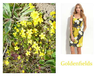 Flower Week: Goldenfields