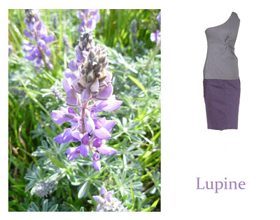 Flower Week: Lupine