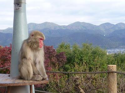 Travel: Arashiyama