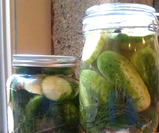 Recipe: Refrigerator Dill Pickles