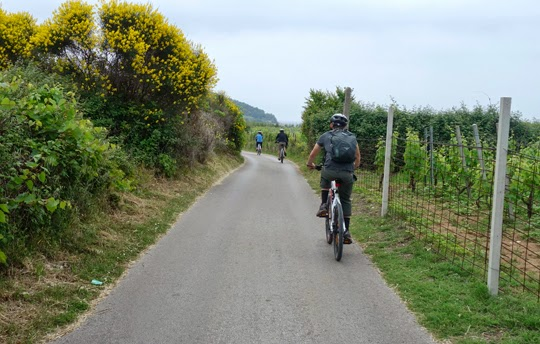 Bike Riding Through Croatian Wine Country Between Korcula Town to Lumbarda