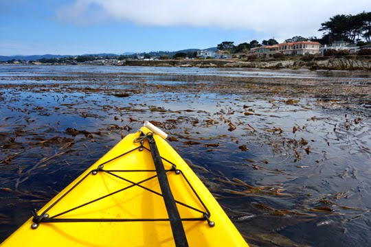 Kayaking through Pacific Grove's Kelp Forest