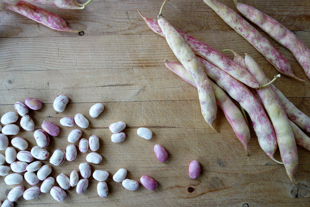Cooking with Cranberry Beans