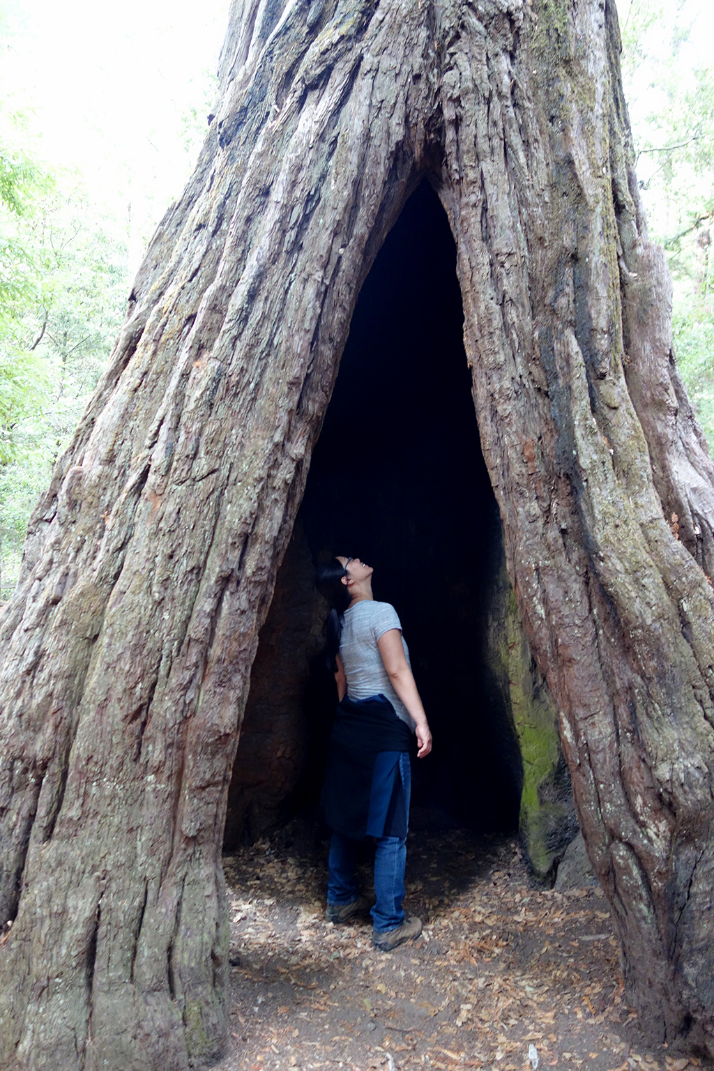 Jackie In Redwood Tree