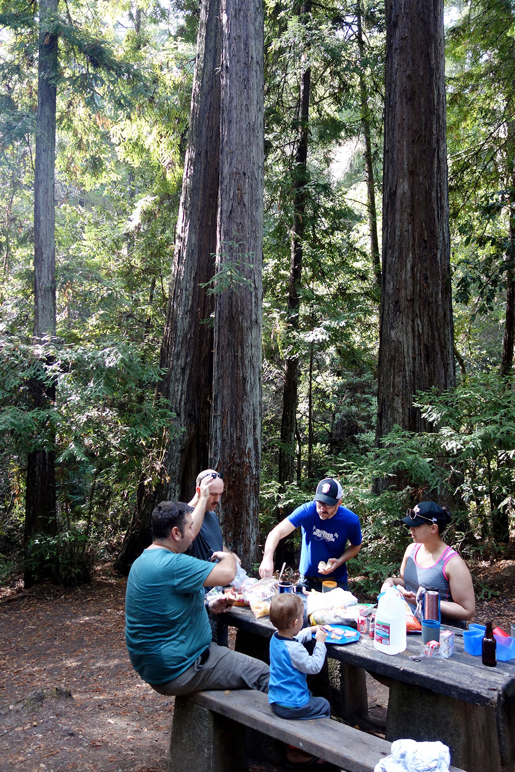 Picnic at Portola redwoods