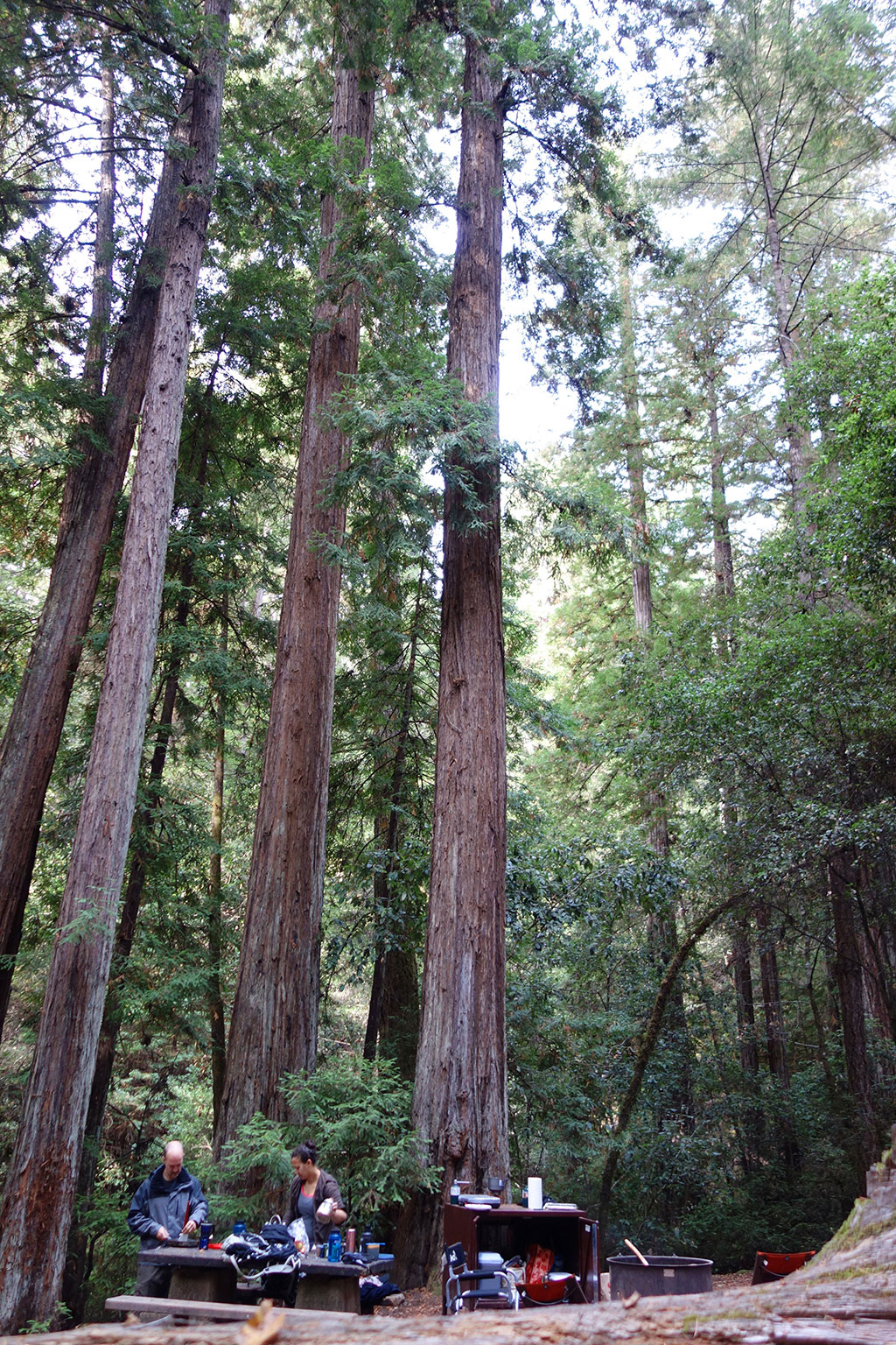 Portola Redwood State Park