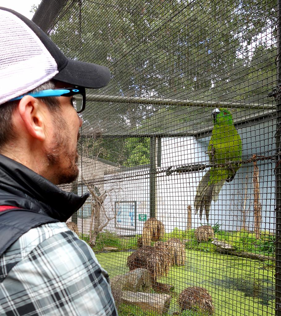 Invercargill Aviary