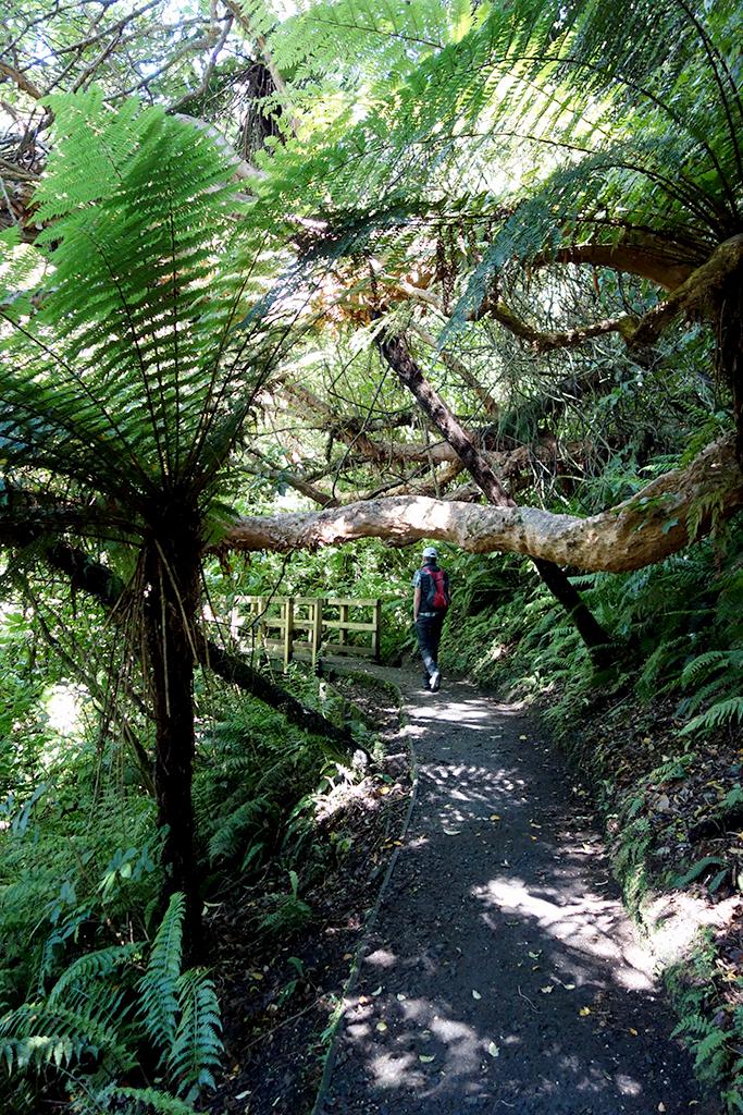 Stewart Island Ferns