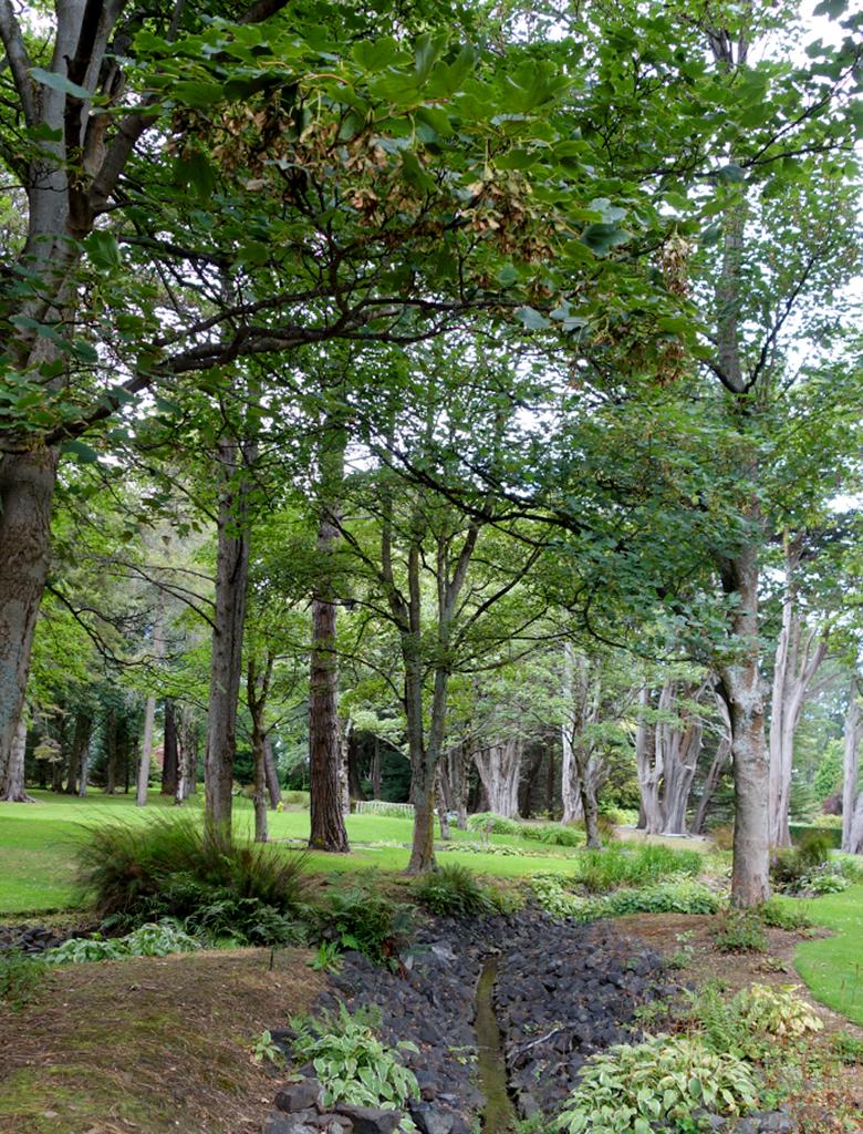 Trees in Queens Park NZ