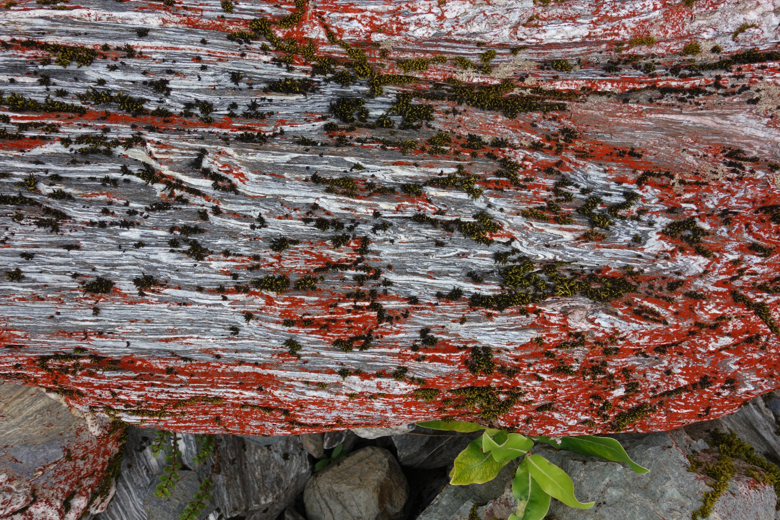 Red lichen in New Zealand