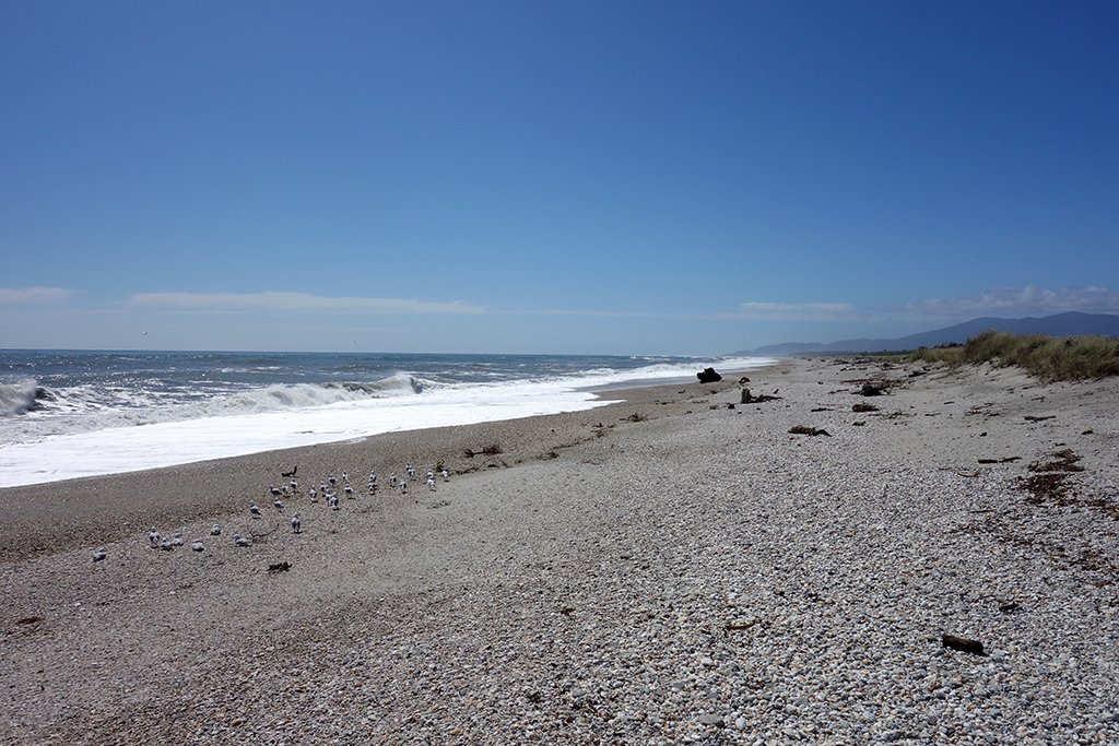 Haast Beach, New Zealand