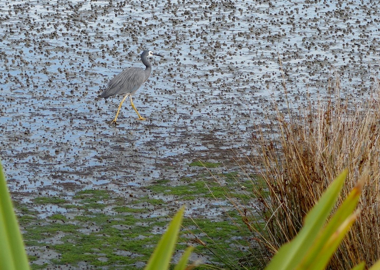 Birds of Nelson, New Zealand
