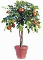 To Do: Buy new citrus tree
