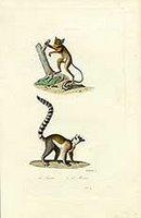Mammalian moment