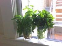 Urban girl tip: Instant herb garden