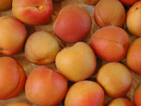 Things I Love Today: Apricots