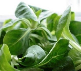 Recipe: Pollo Asado Salad