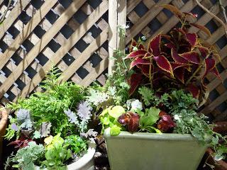 Garden: New Planters