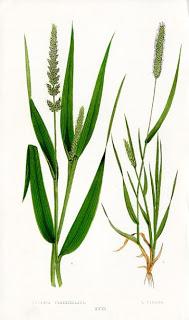 Inspired: Grasses