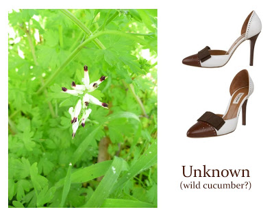 Flower Week: White and Brown