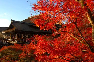 Tips: Kyoto