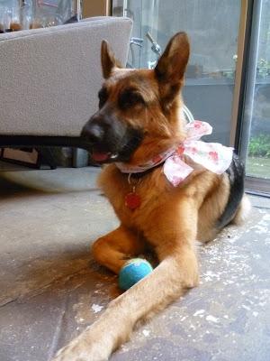 To Do: Dogsitting