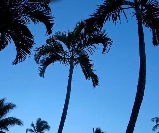 Hawaii: Early Days in Kihei