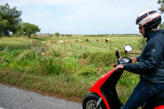 Seeing the Greek Island of Kos on a Tiny Red Scooter, Part I