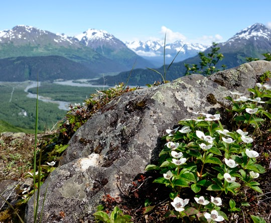 Alaska by RV: What to See, Eat, Explore and Wear for a 2 Week Summer Adventure