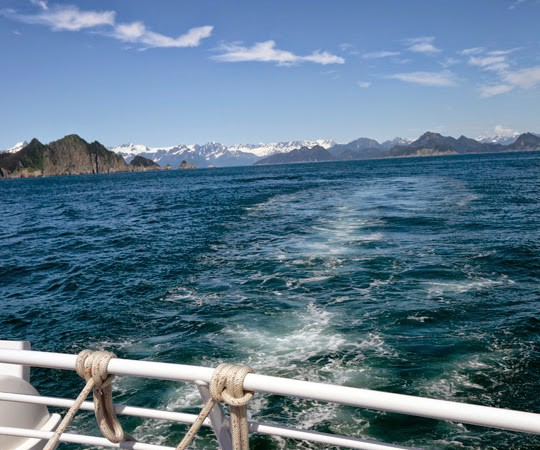 Whales, Puffins and Glaciers on a Boat Tour of Kenai Fjords, Alaska