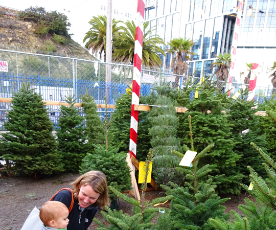How to Get a Christmas Tree in San Francisco