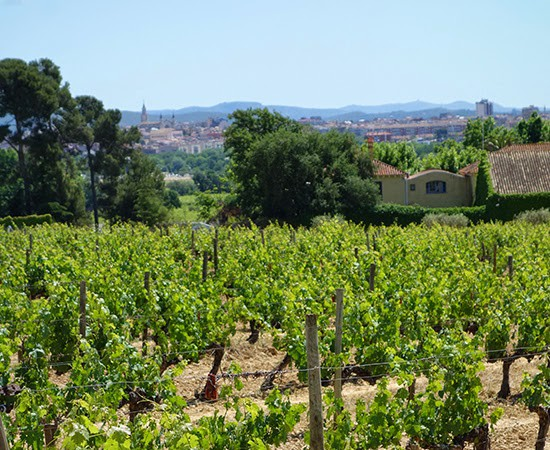 Eating, Biking and Wine Tasting in Penedès, Spain