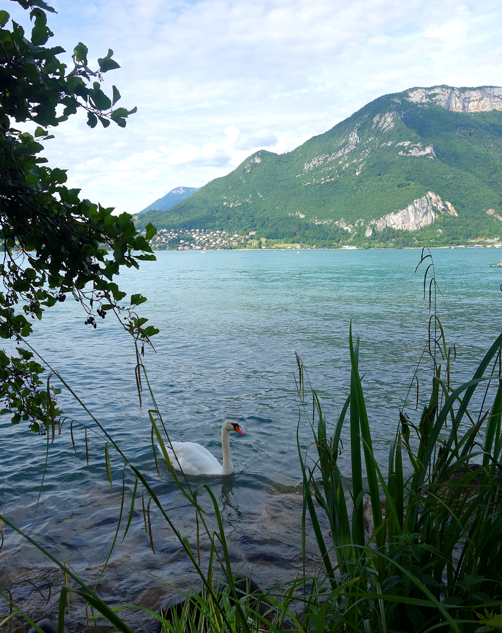 Swan Lake in Annecy, France