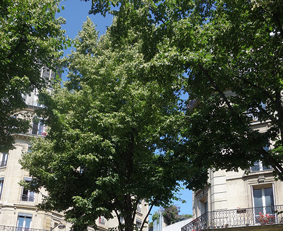 Bonjour Paris! 8 Picnics for 8 Days in Paris