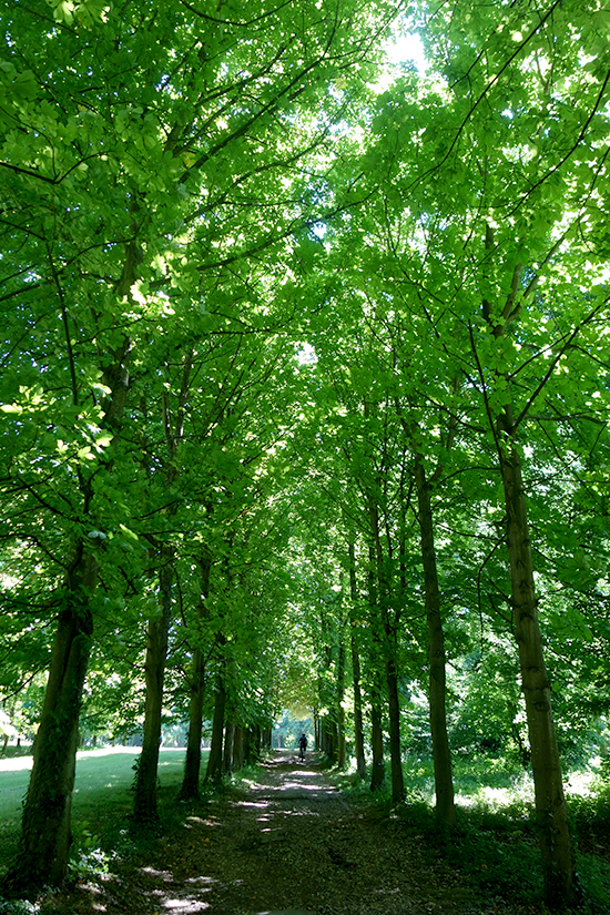 Leafy corridor at Saint-Cloud park in Paris