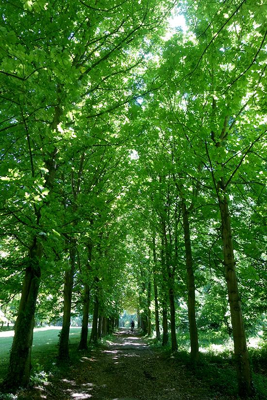 Leafy corridor at Saint-Cloud park in Paris
