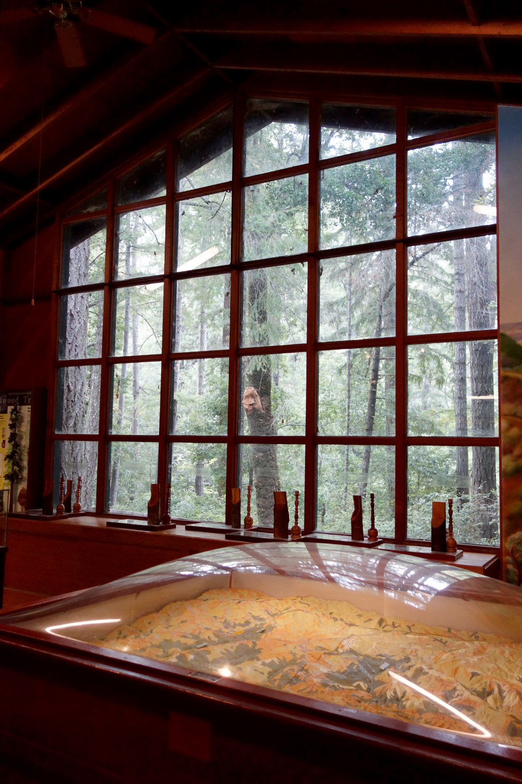 Portola Redwoods Visitor
