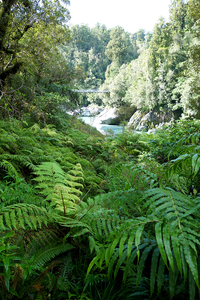 Ferns in Hokitika, NZ